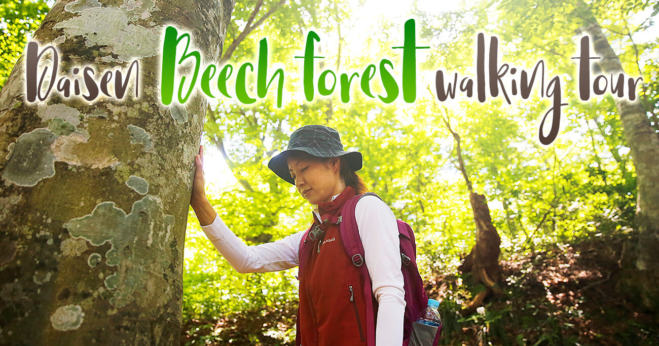 Daisen Beech forest walking tour